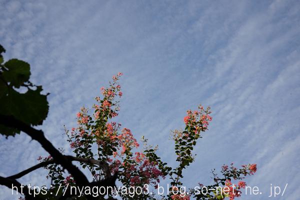 庭から空を見上げる